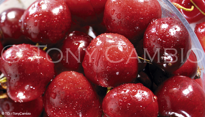A Fresh Bowl of glistening Cherries